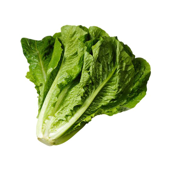 Wrap iceberg sandwich romaine. Lettuce clipart head lettuce