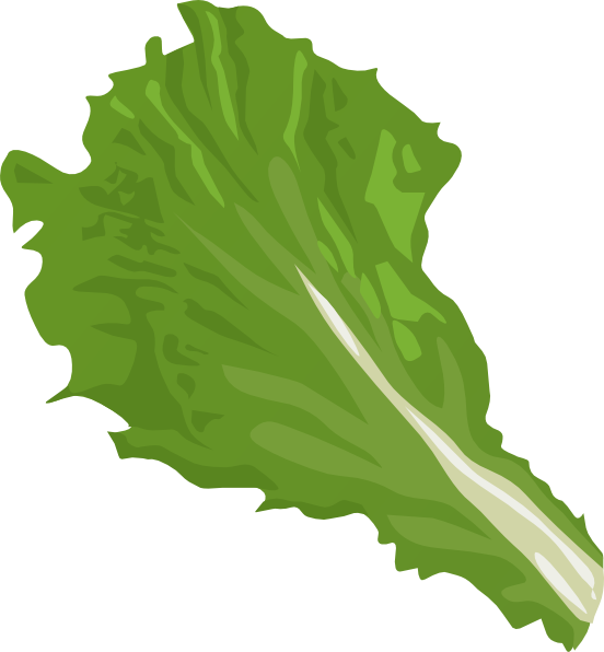 Lettuce clipart head lettuce.  collection of png