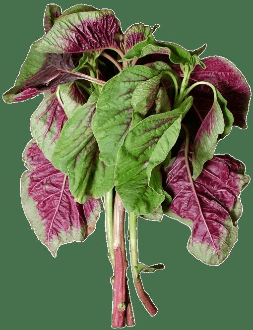En choy transparent png. Lettuce clipart kangkong