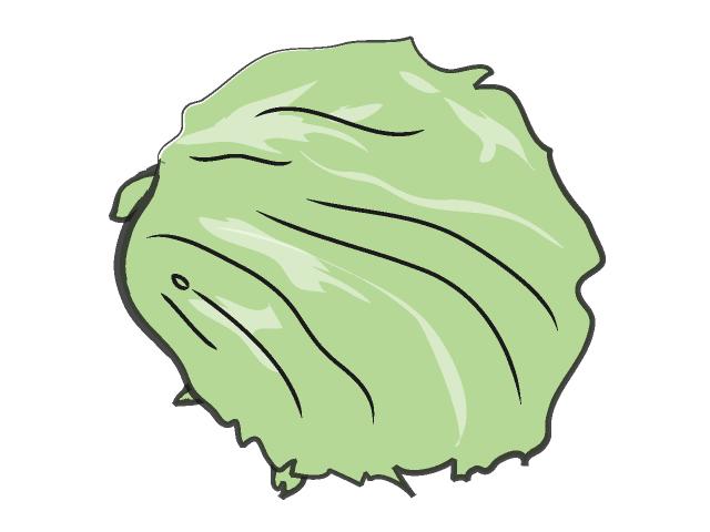 Lettuce clipart lettuce slice. Free cliparts download clip