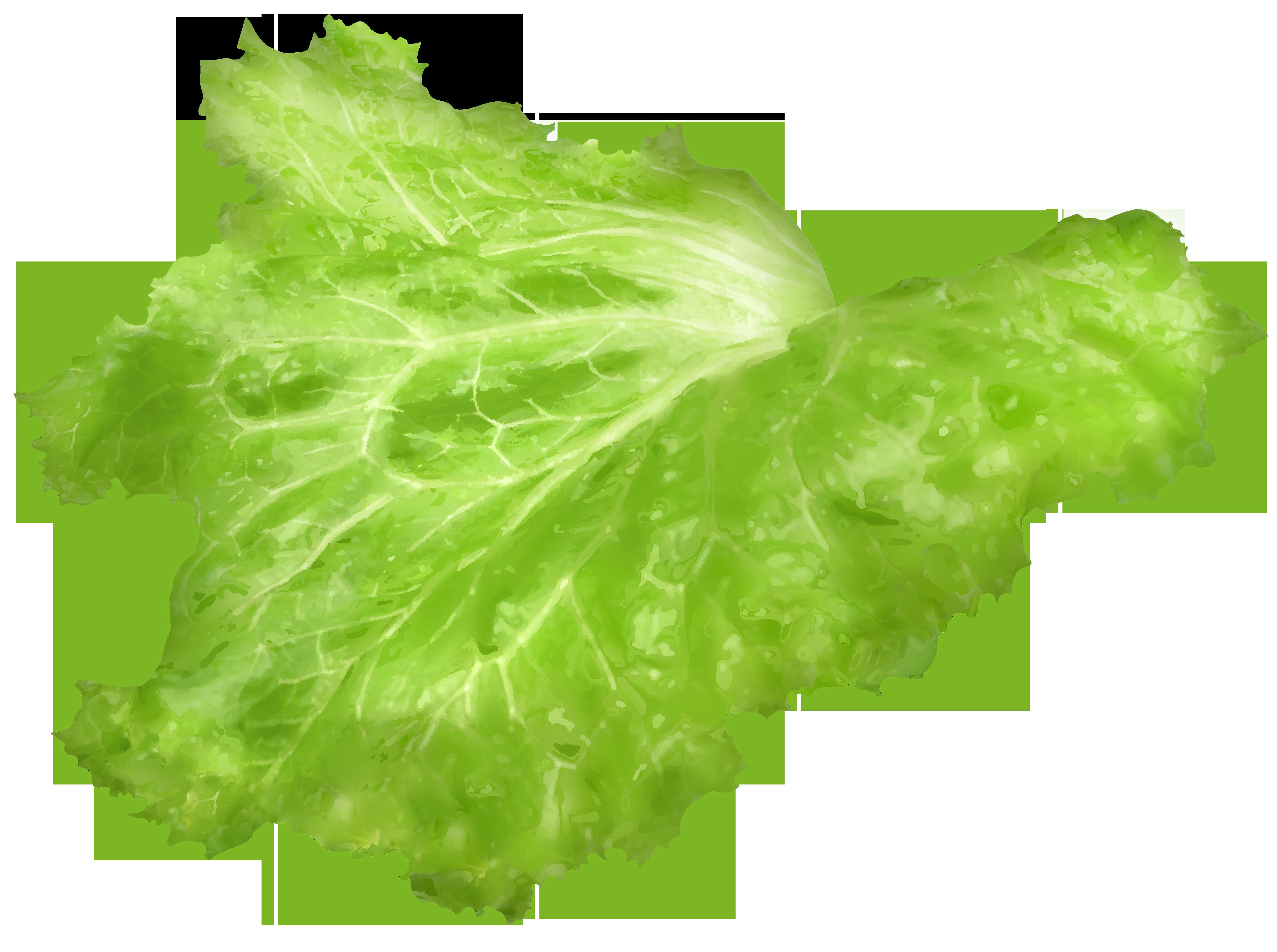 Leaf png image gallery. Lettuce clipart lettuce slice