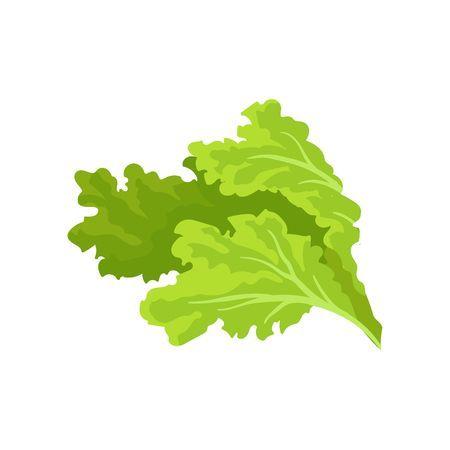 Leaf portal . Lettuce clipart lettuce slice