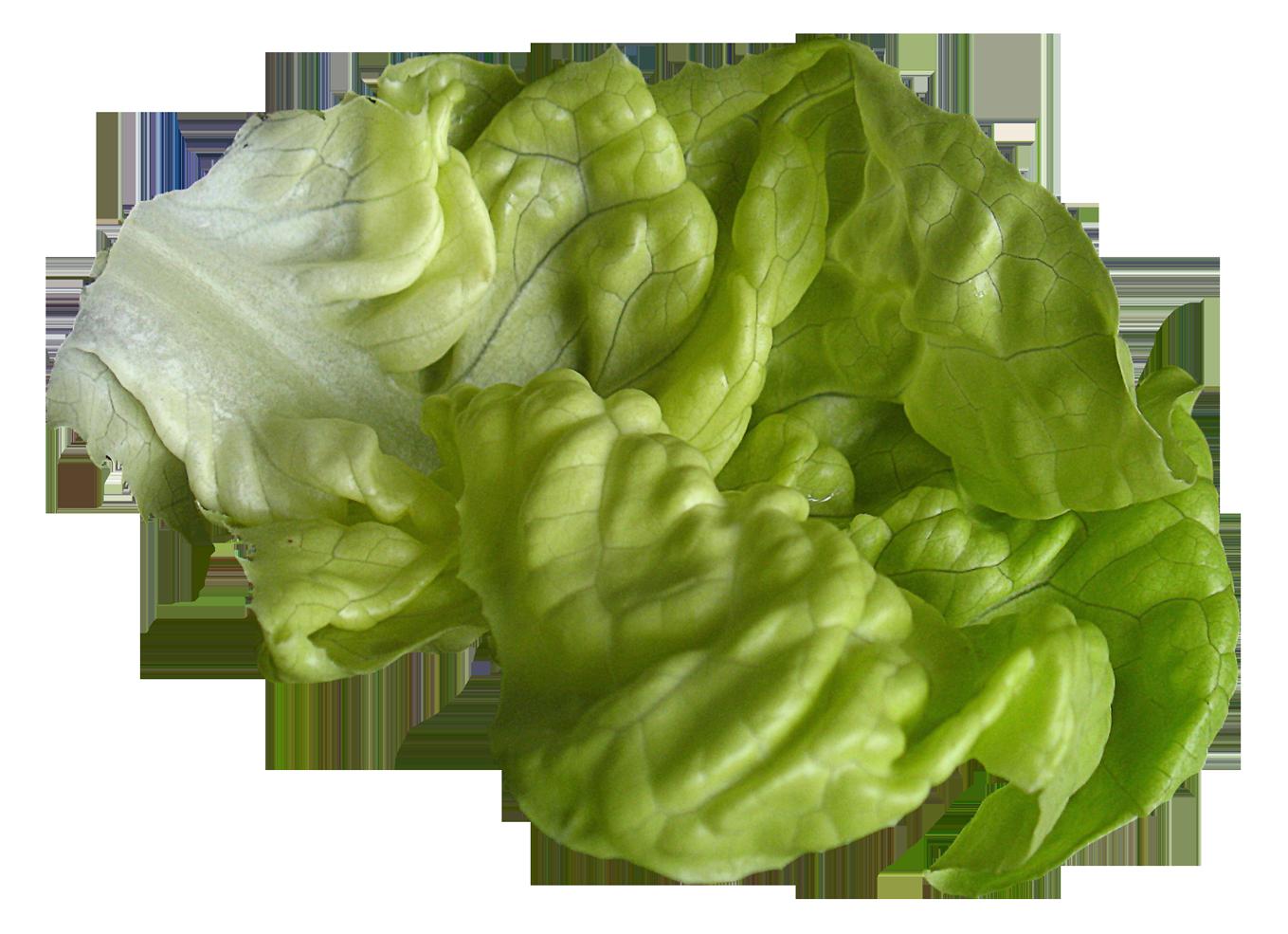 Png image purepng free. Lettuce clipart lettuce slice