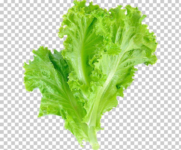 Lettuce clipart lettuce slice. Romaine leaf vegetable salad