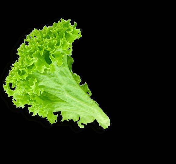 Lettuce clipart sliced. Index of user folder