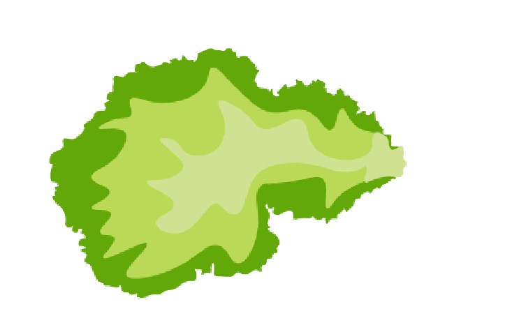 collection of piece. Lettuce clipart sliced