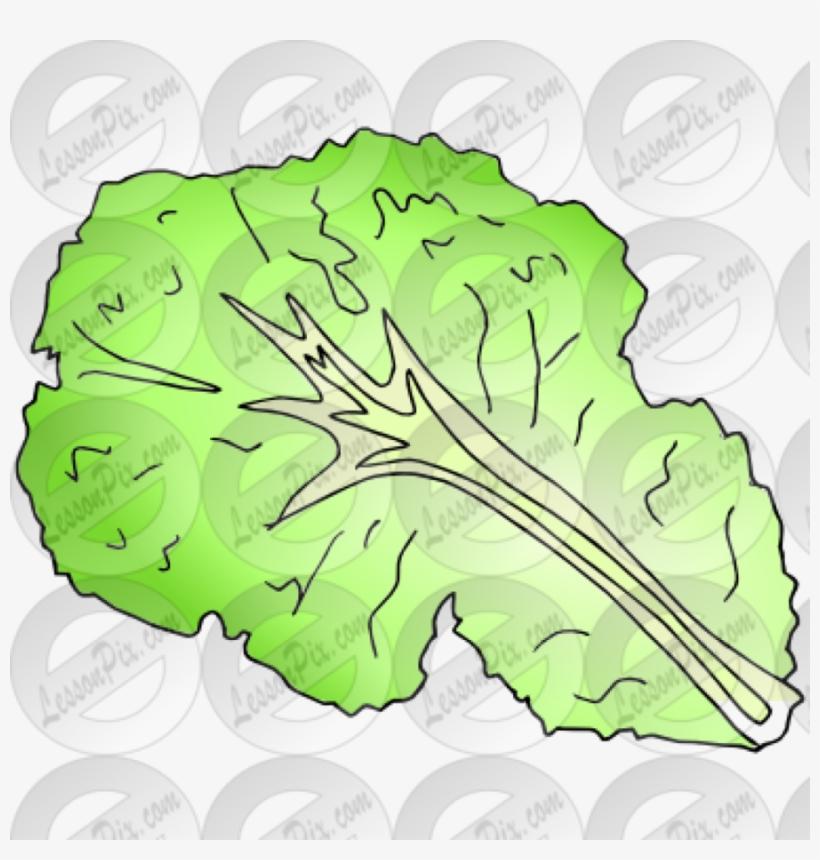 Download leaf black and. Lettuce clipart sliced
