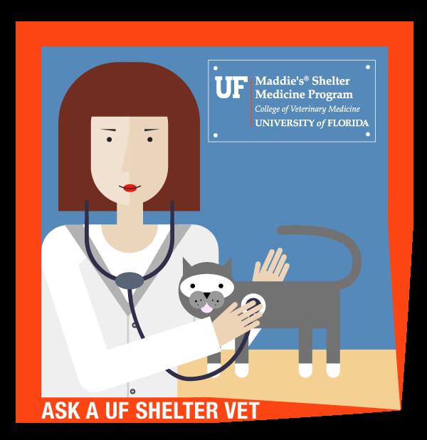 Ask a shelter vet. Library clipart veterinarian