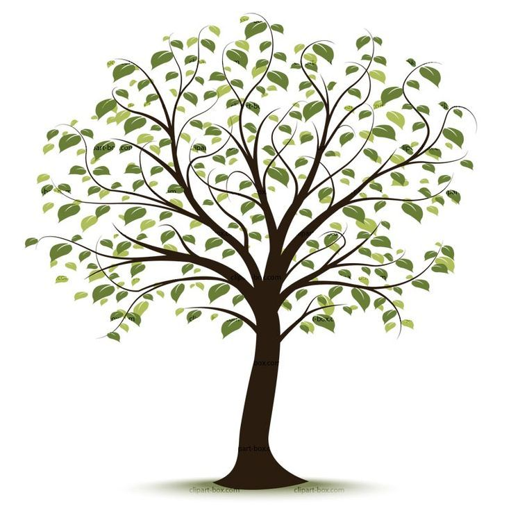 Trees free tree of. Life clipart