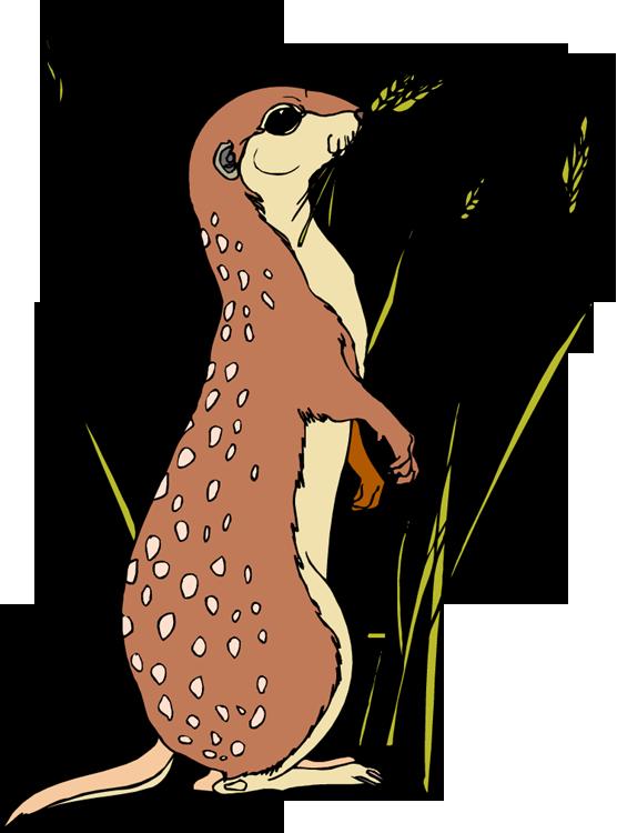 Free meerkat . Life clipart life span