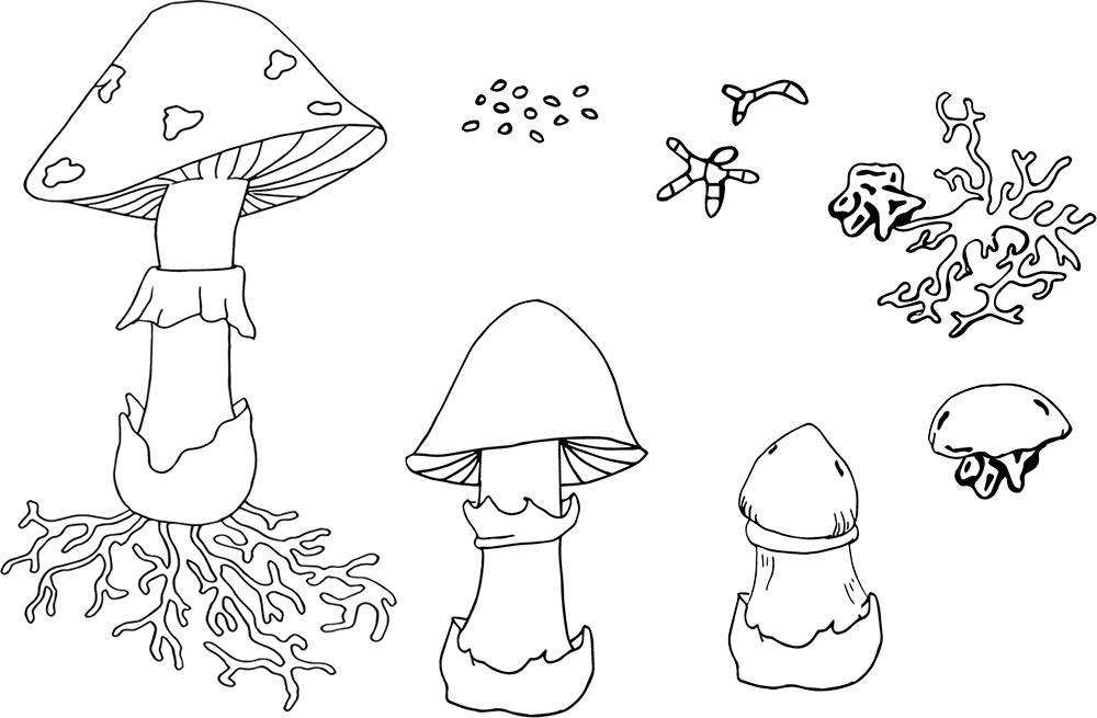 Mushrooms clipart printable. Mushroom printables homeschool free