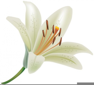 Lily clipart. Free white images at