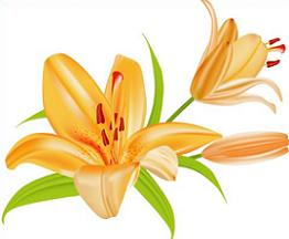Lily clipart. Free lilies