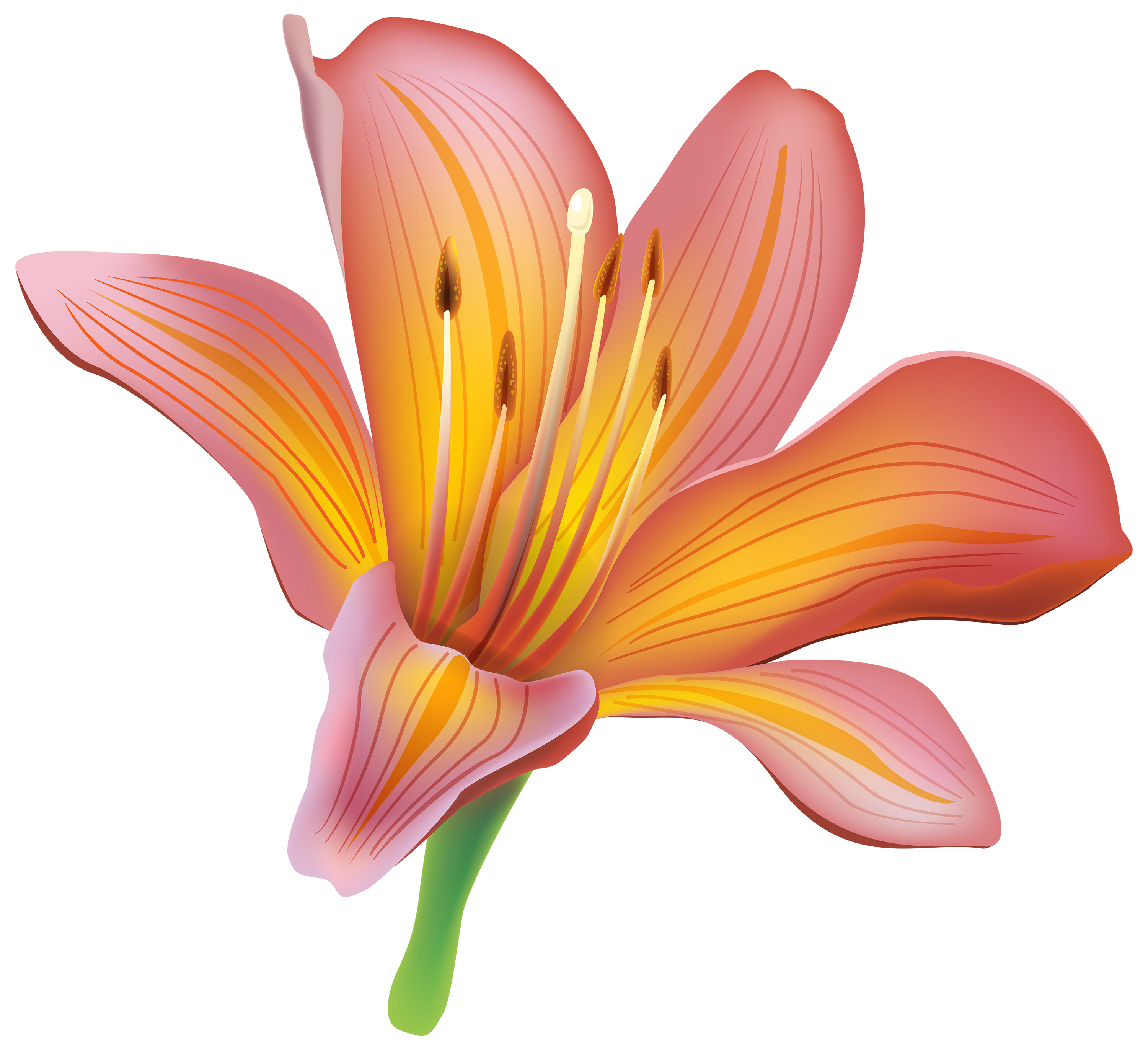 Lily flower png. Clipart best web