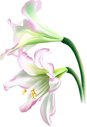 Lily clipart. Flower clip art flowers