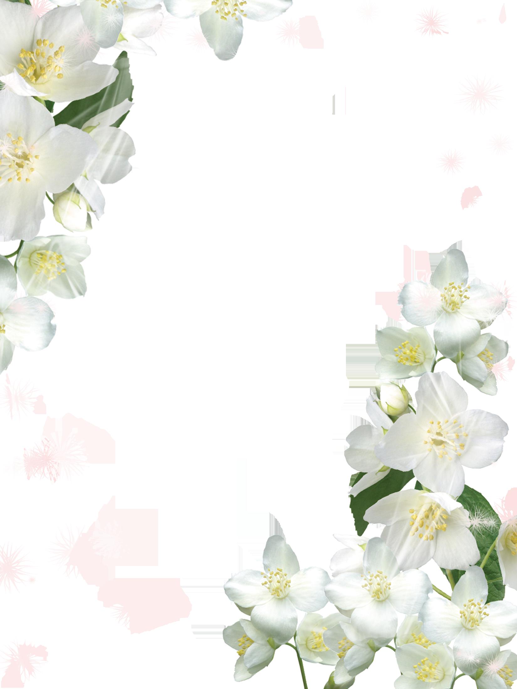 Lily clipart blue jasmine. Transparent white photo frame