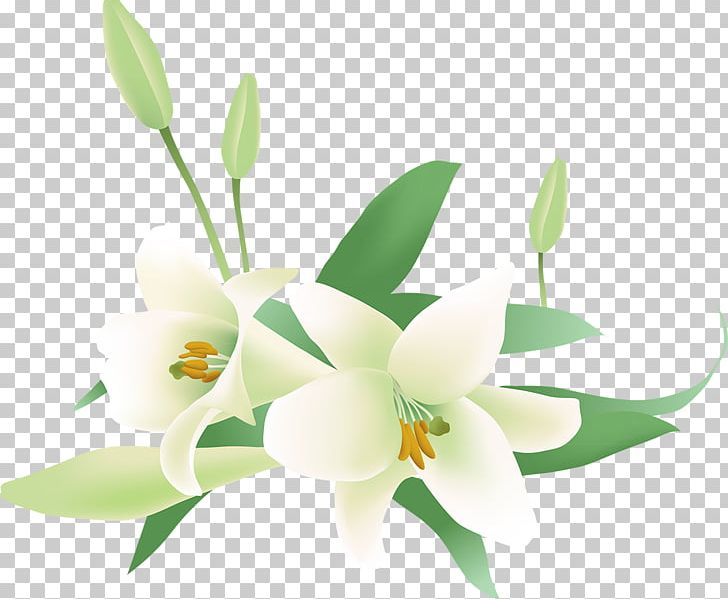 Flower png artificial arumlily. Lily clipart blue jasmine