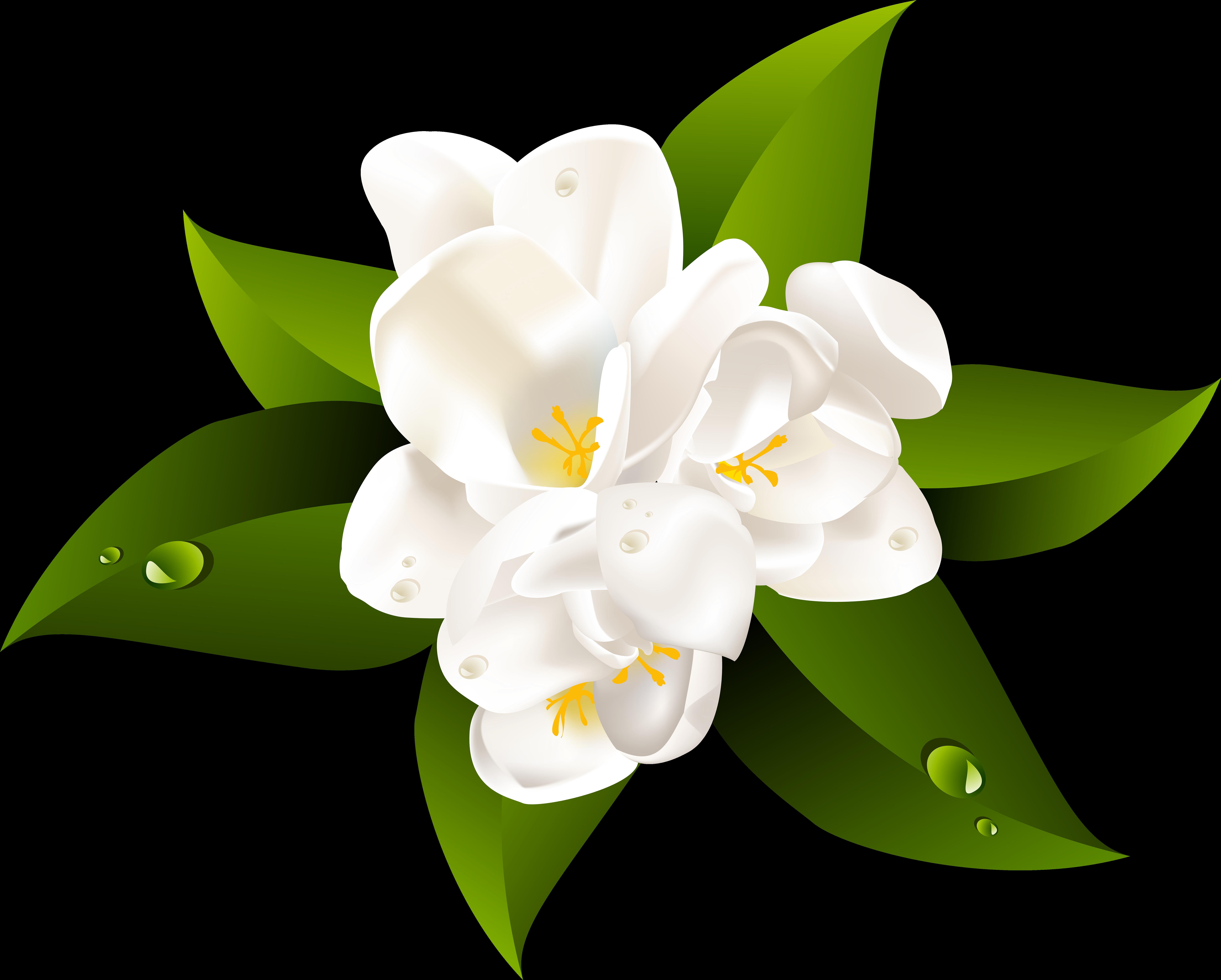 Transparent cartoon jing fm. Lily clipart blue jasmine