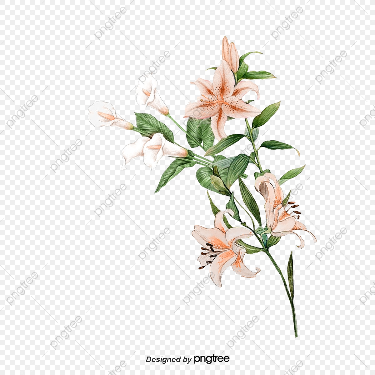Hand painted png transparent. Lily clipart elegant