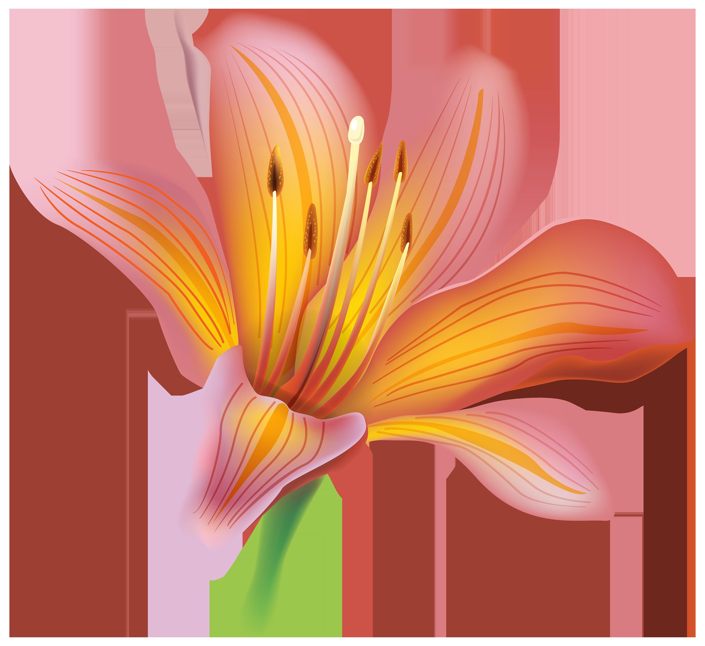Lily clipart elegant. Flower png flowers pinterest