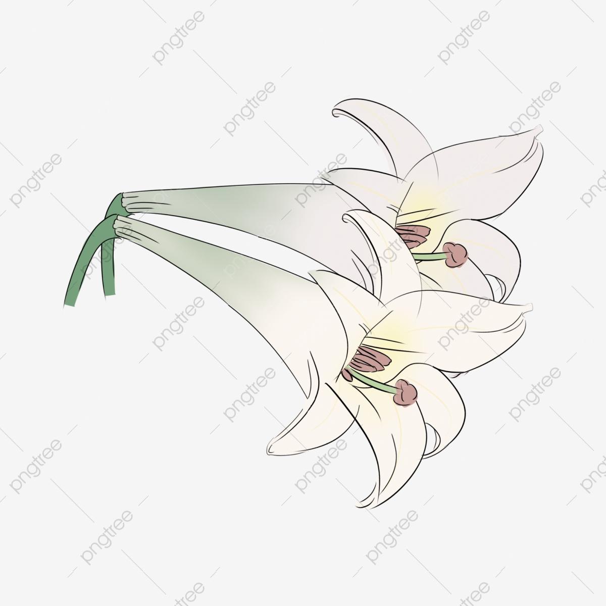 Lily clipart elegant. White free buckle illustration