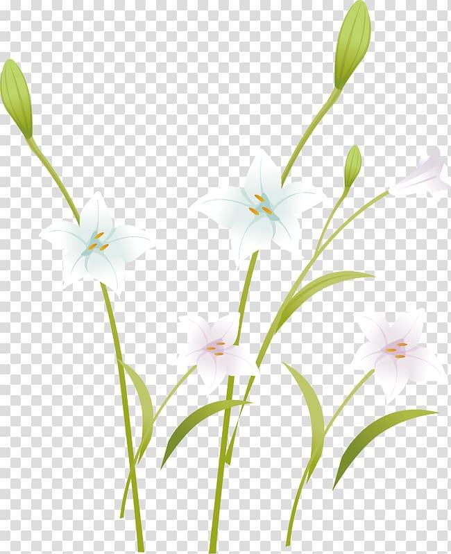Lily clipart elegant. Floral design petal pattern