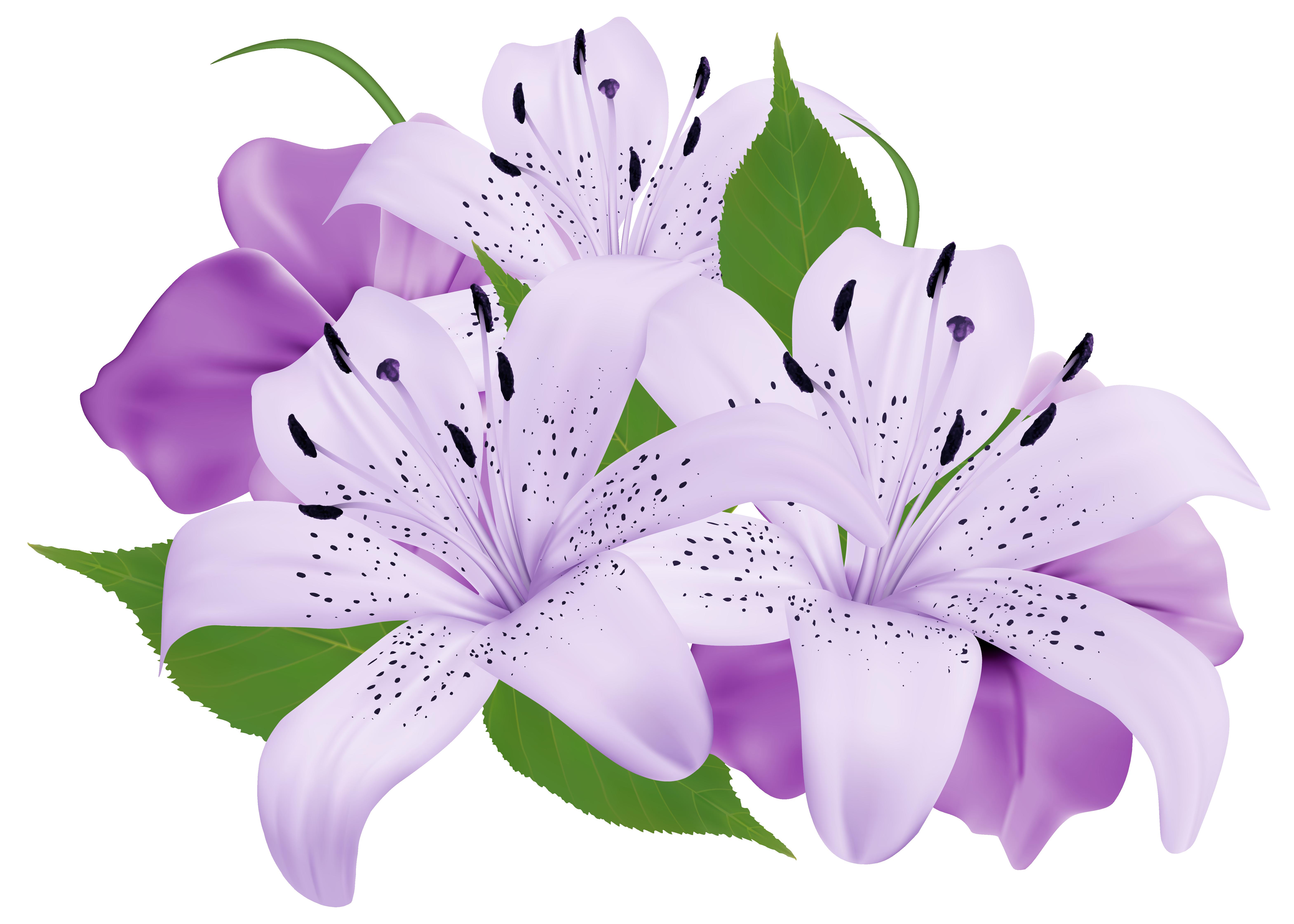 Lily clipart flower bokeh, Lily flower bokeh Transparent ...