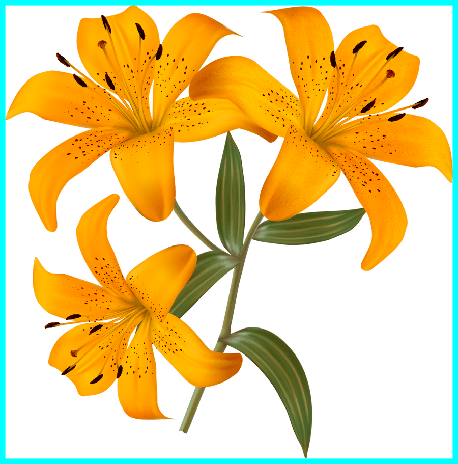 lily clipart garden