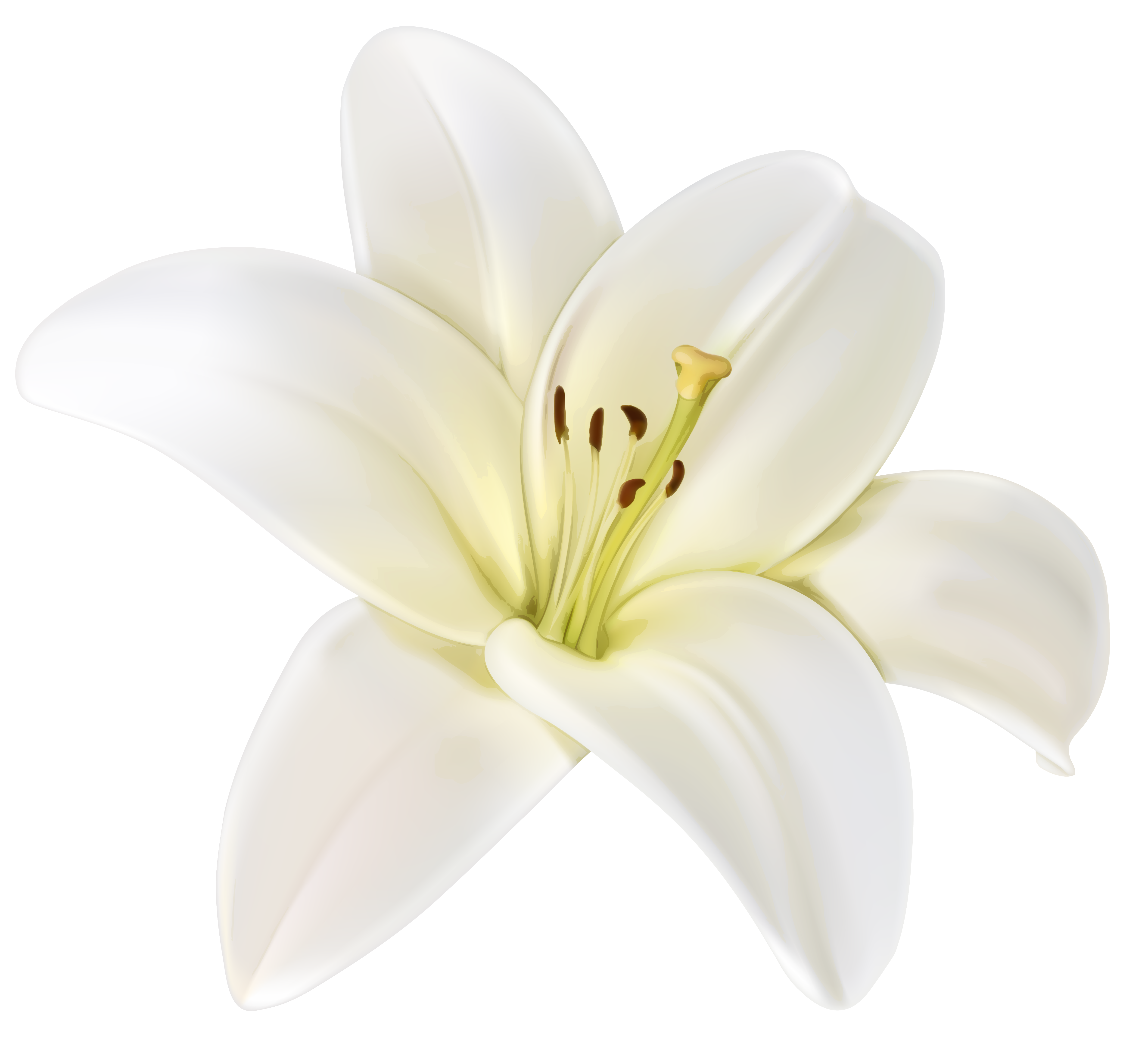 White flower png. Beautiful clipart image gallery