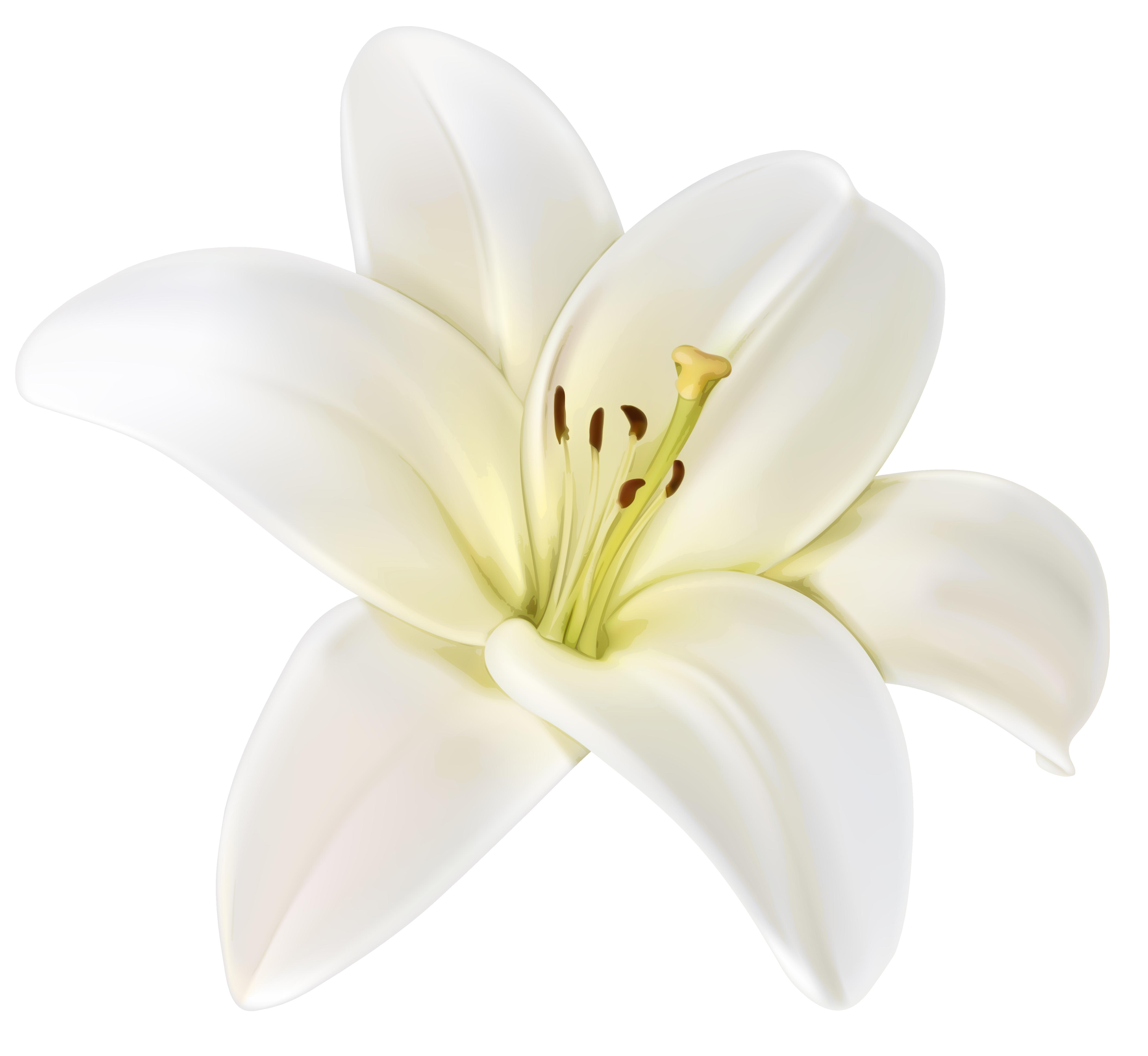 Lily island flower