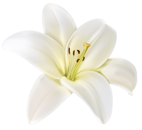 White flower png. Beautiful clipart image beauty
