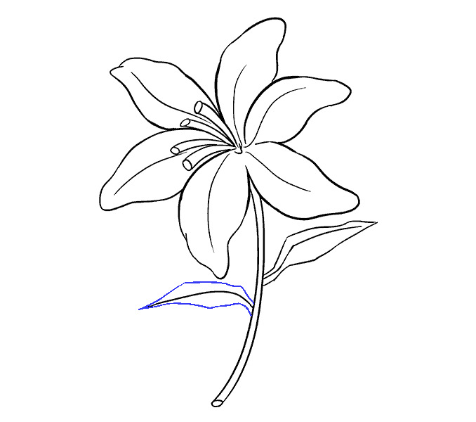 Lotus clipart shapla. Lilies drawing at getdrawings