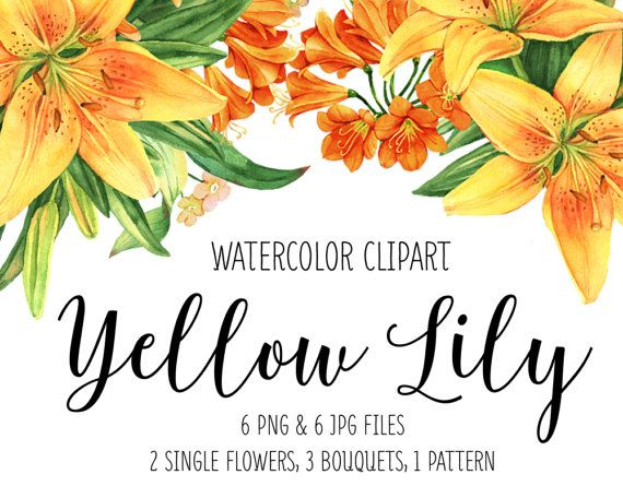 Pin on watercolor flower. Lily clipart single