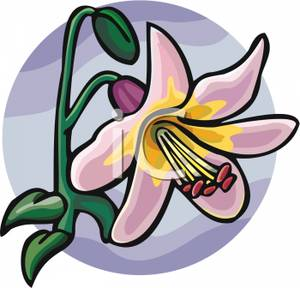 Lily clipart single. Pink royalty free picture