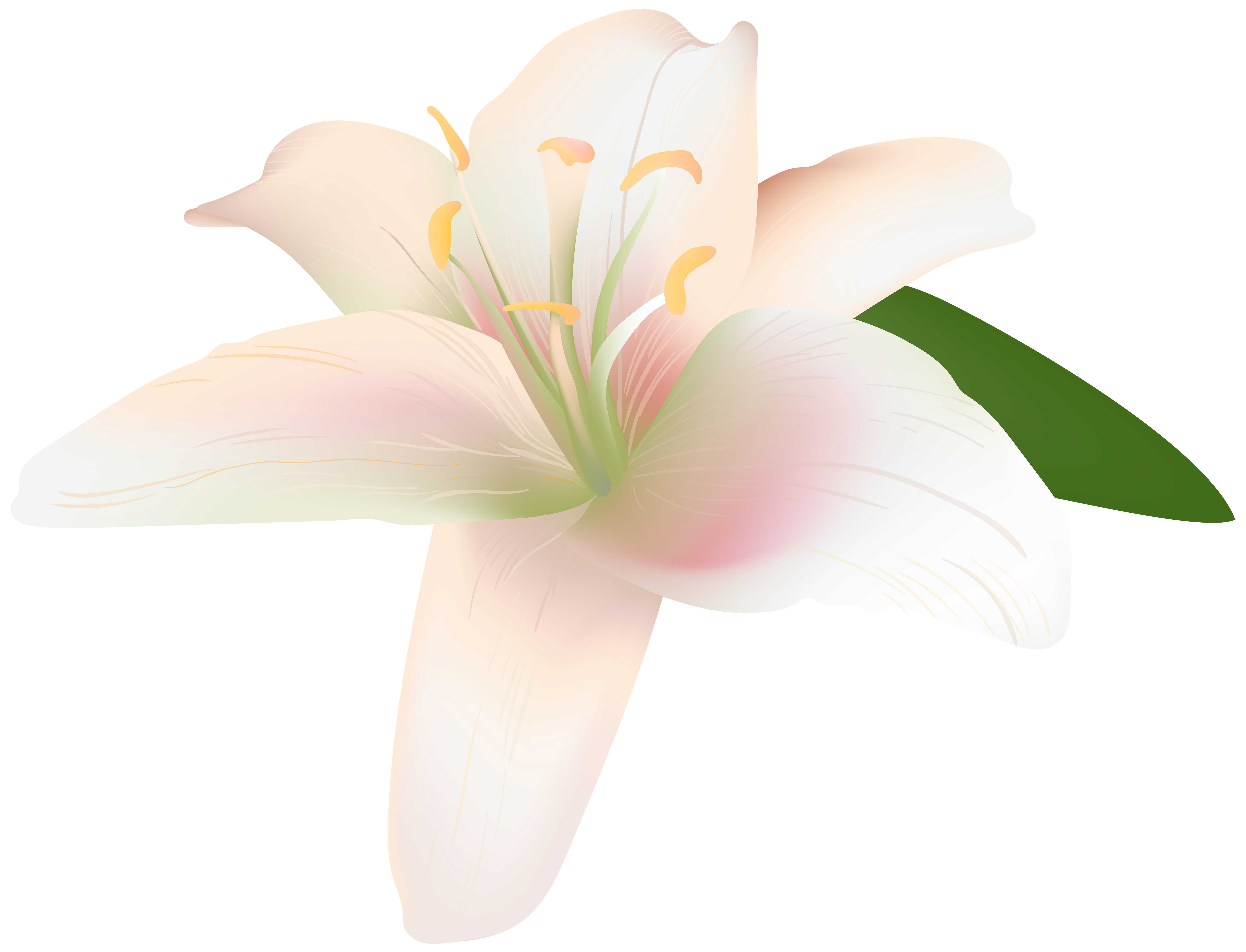 lily clipart summer flower