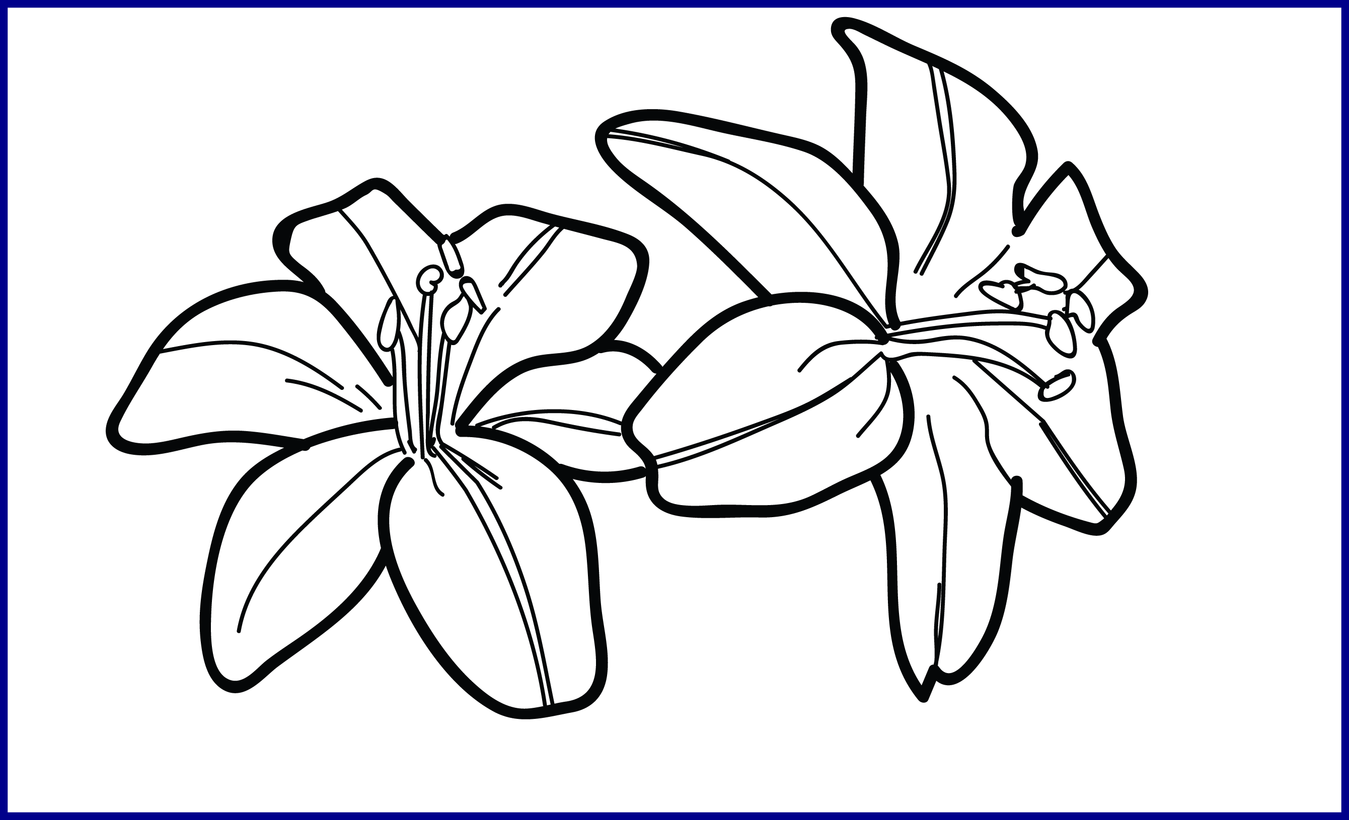 Lily Clipart Tiger Lily Lily Tiger Lily Transparent Free For Download On Webstockreview 2020