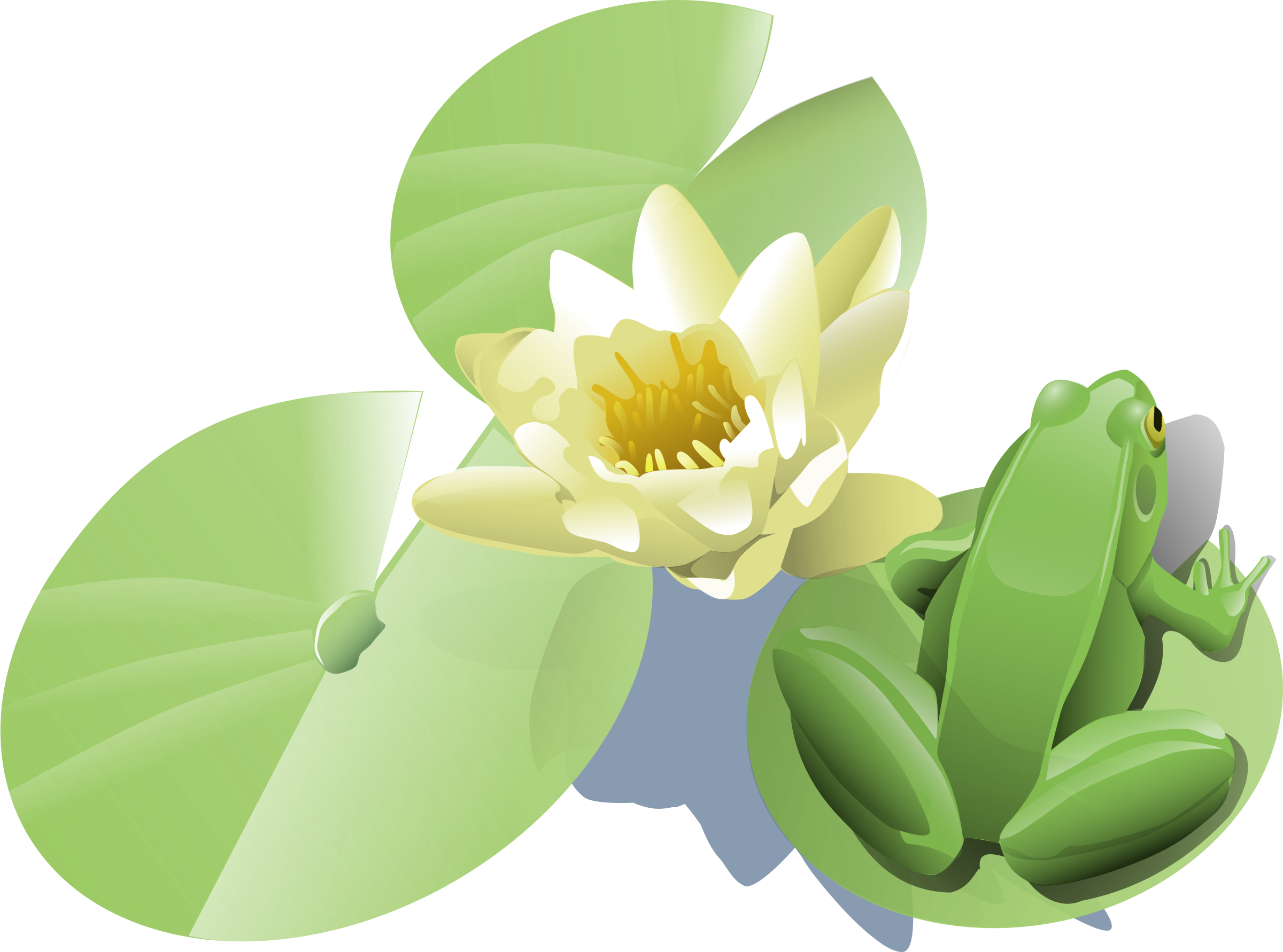Lotus clipart waterlily. Frog on a lily