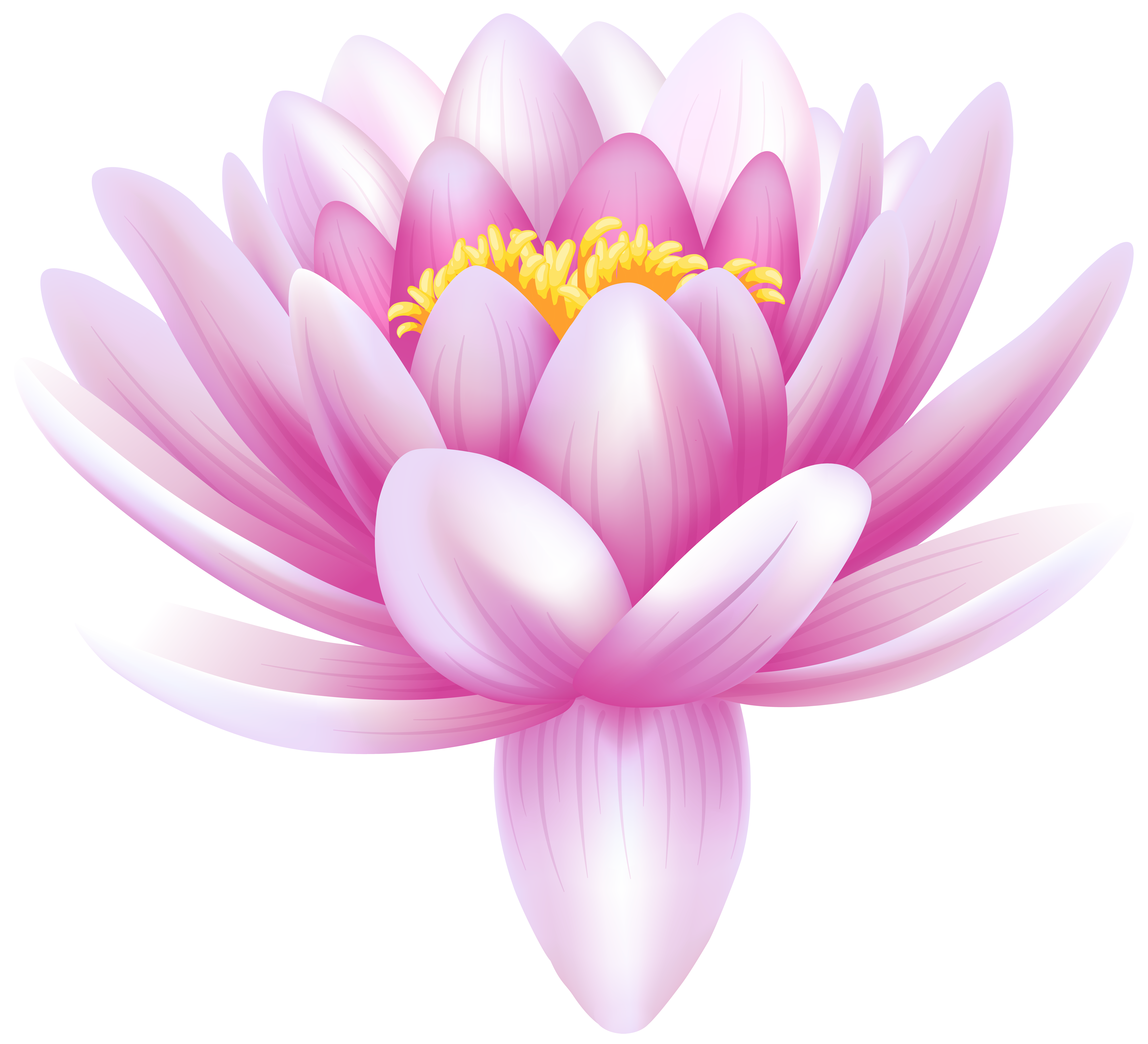 collection of pink. Purple clipart water lily