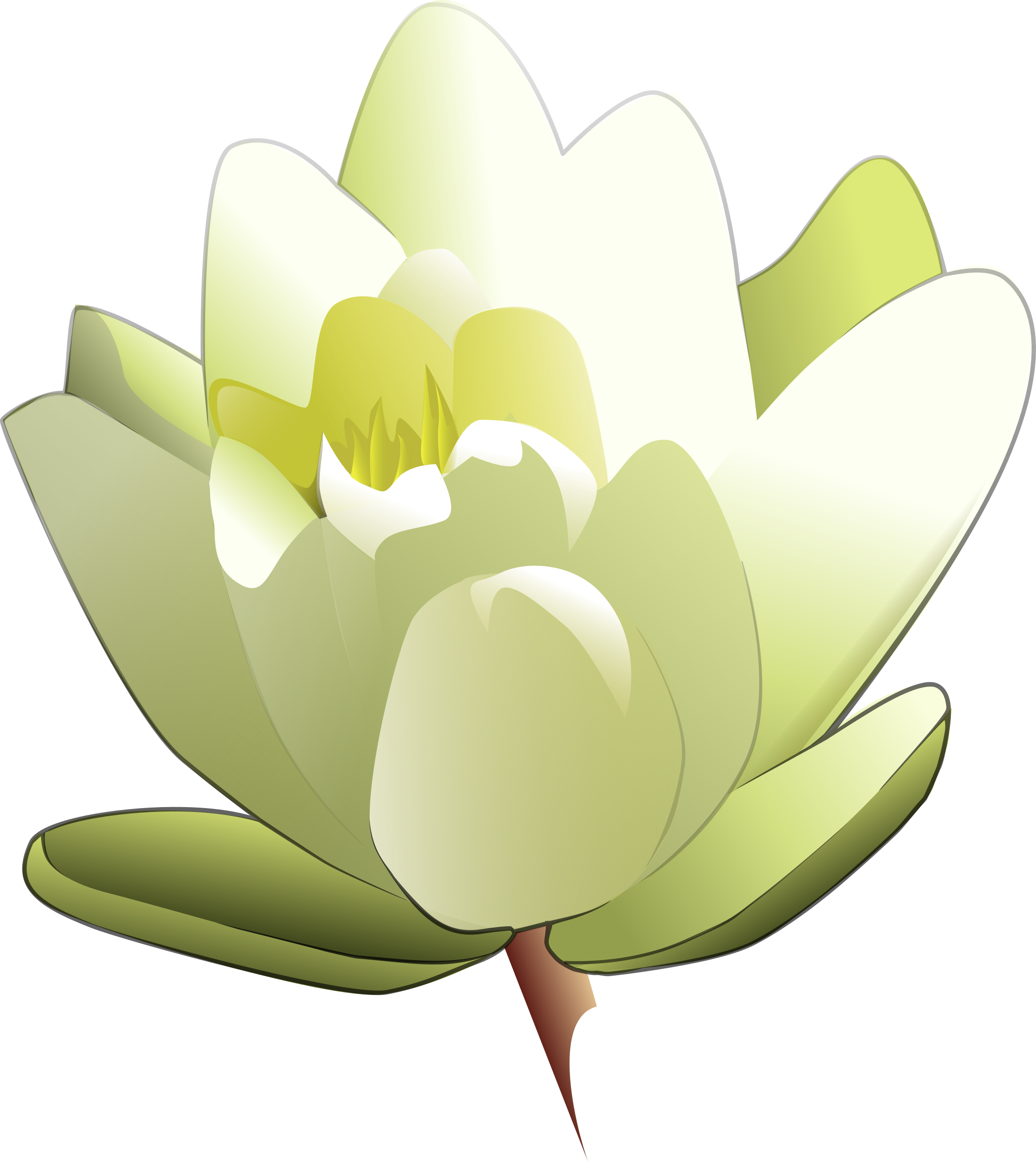 lily clipart yellow