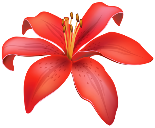 Red clipart transparent clip. Lily flower png