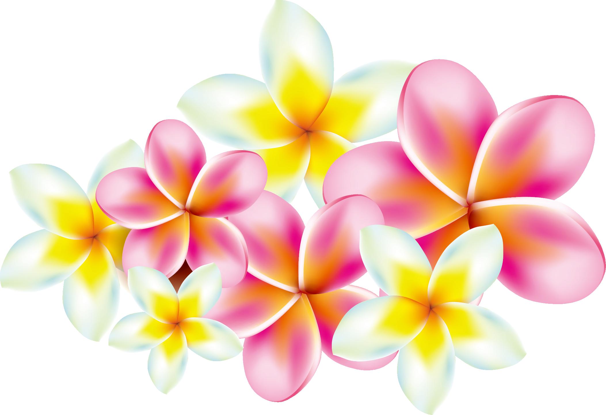 Frangipani clip art transprent. Plumeria flower png
