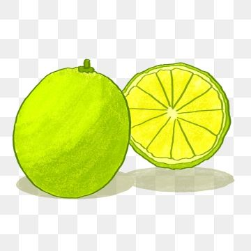Lime clipart summer fruit. Fresh lemon hand painted