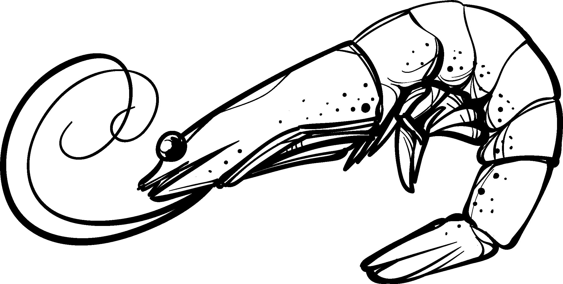 Pomegranate clipart black and white. Shrimp cartoon clip art