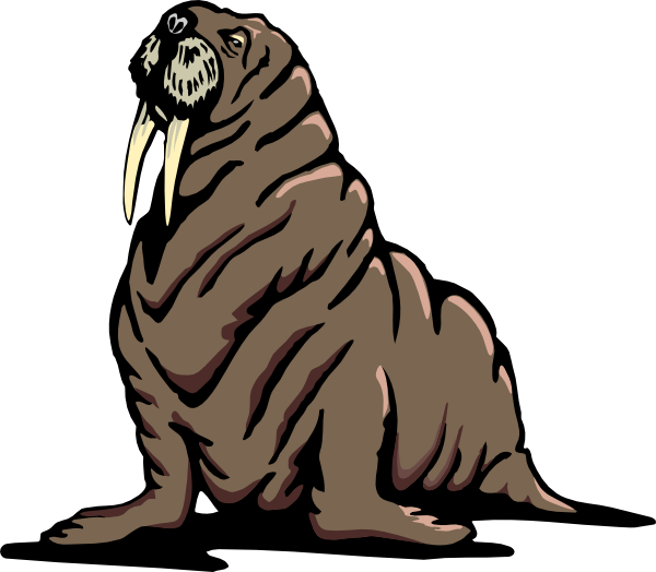 Walrus clipart tusk. Wrinkled clip art at