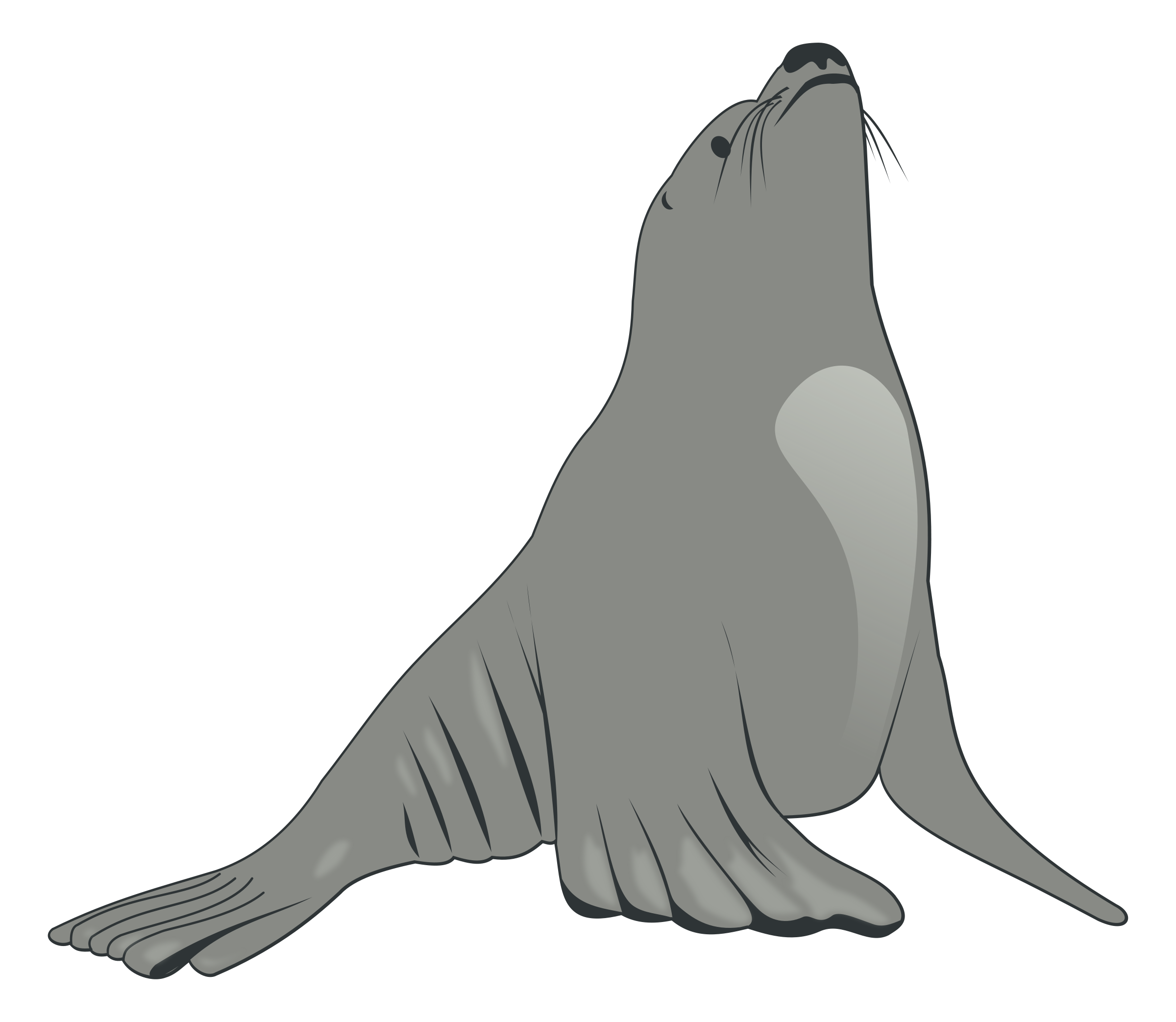 Free sea lion download. Walrus clipart vector