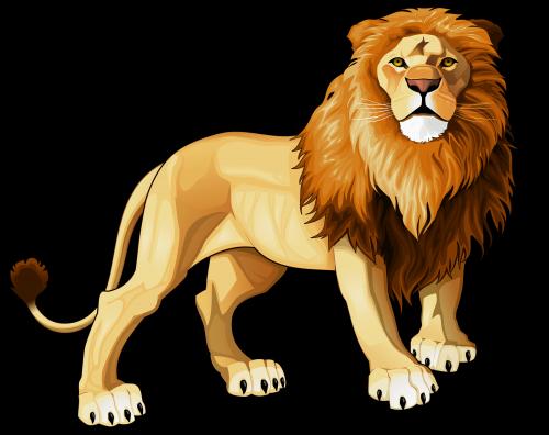Lions clipart.  png web