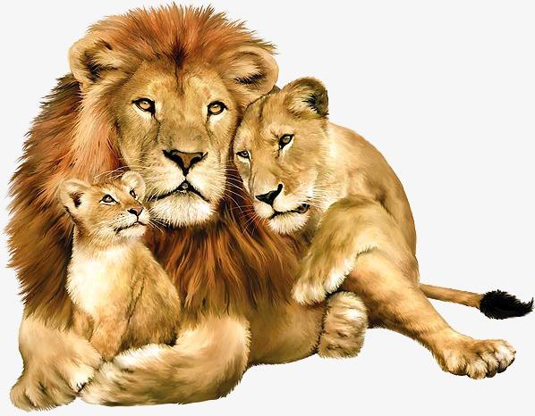 Lions clipart. A lion png image