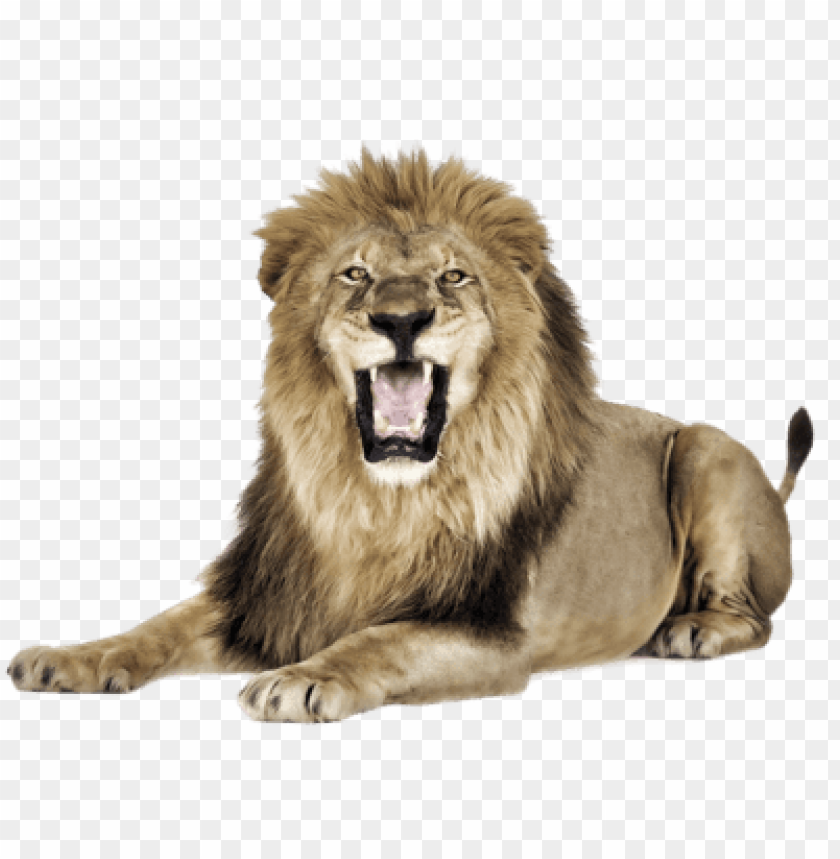 Lion png image with. Lions clipart open mouth
