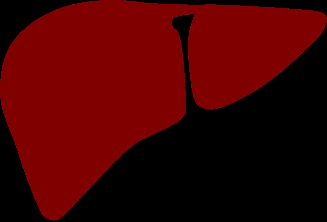 liver clipart beef liver