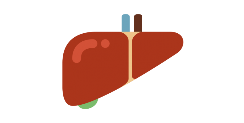 Alterni . Liver clipart illustration